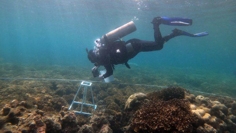 Monitoreo de arrecifes