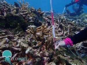 Restaurando arrecifes